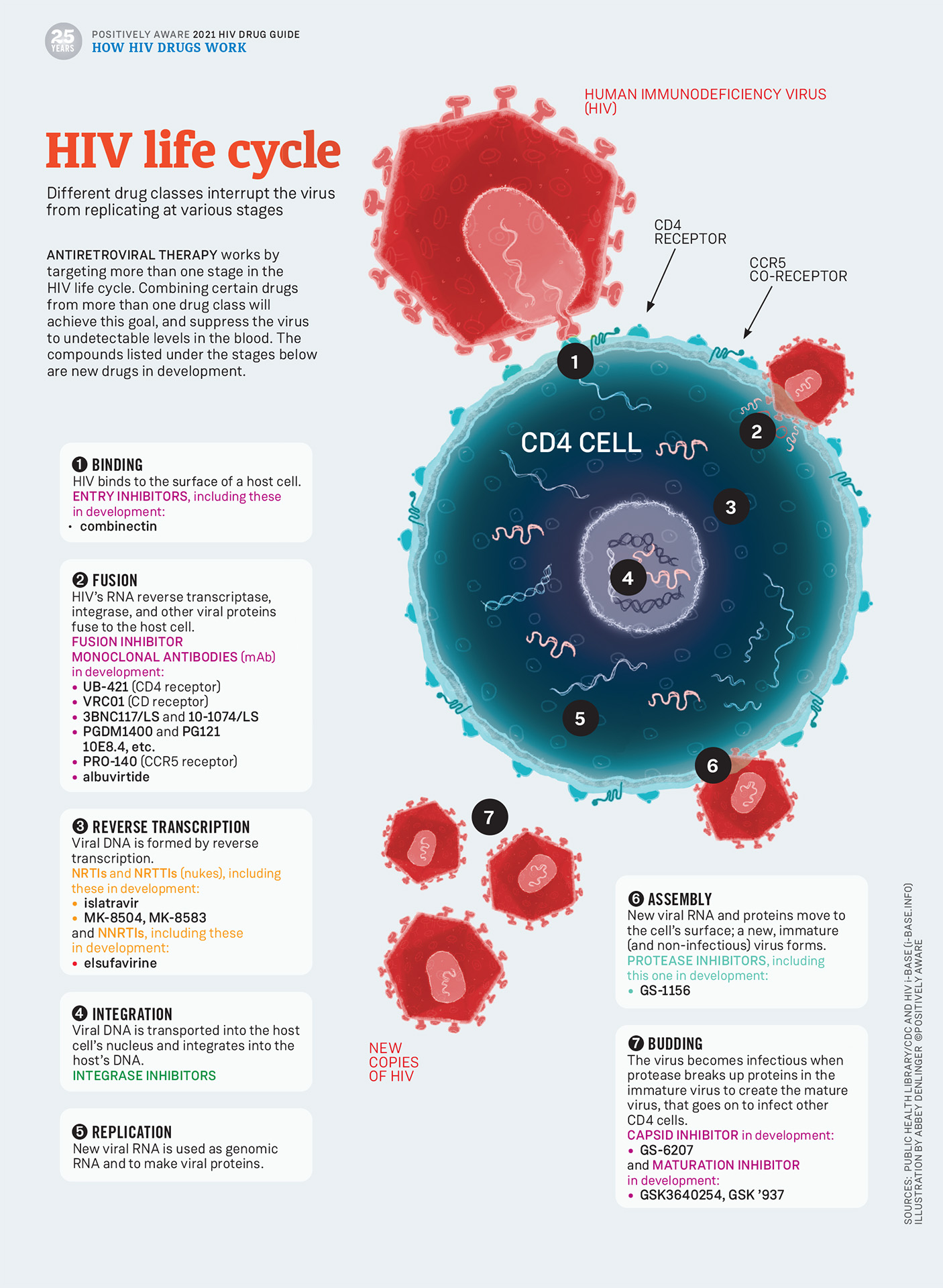 Positively Aware: HIV Life Cycle 2021